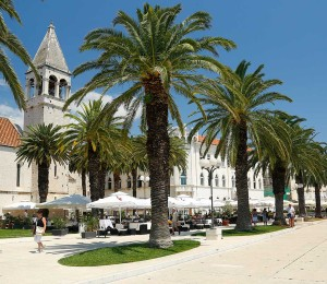 Palm trees on Trogir Promenade