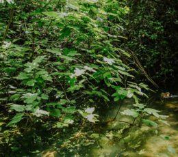 flora and fauna of krka national park