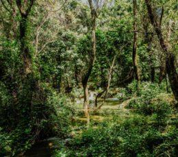 lush green nature of Krka park